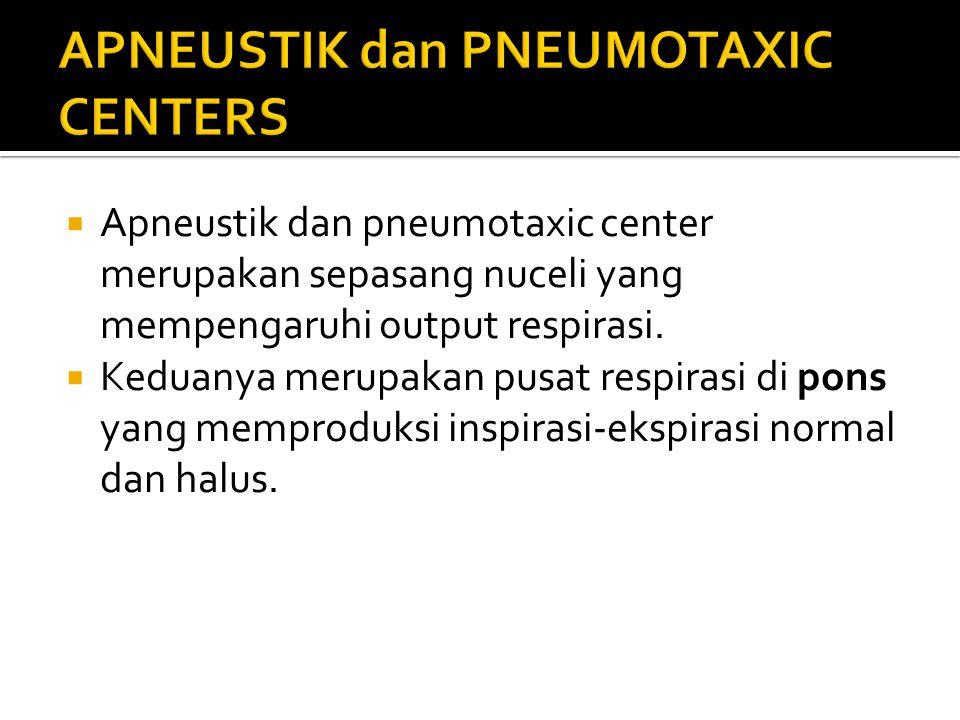  Apneustik dan pneumotaxic center merupakan sepasang nuceli yang mempengaruhi output respirasi.  Keduanya merupakan pusat respirasi di pons yang mem