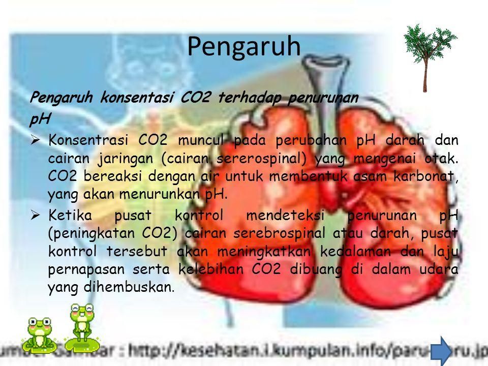 Pengaruh Pengaruh konsentasi CO2 terhadap penurunan pH  Konsentrasi CO2 muncul pada perubahan pH darah dan cairan jaringan (cairan sererospinal) yang