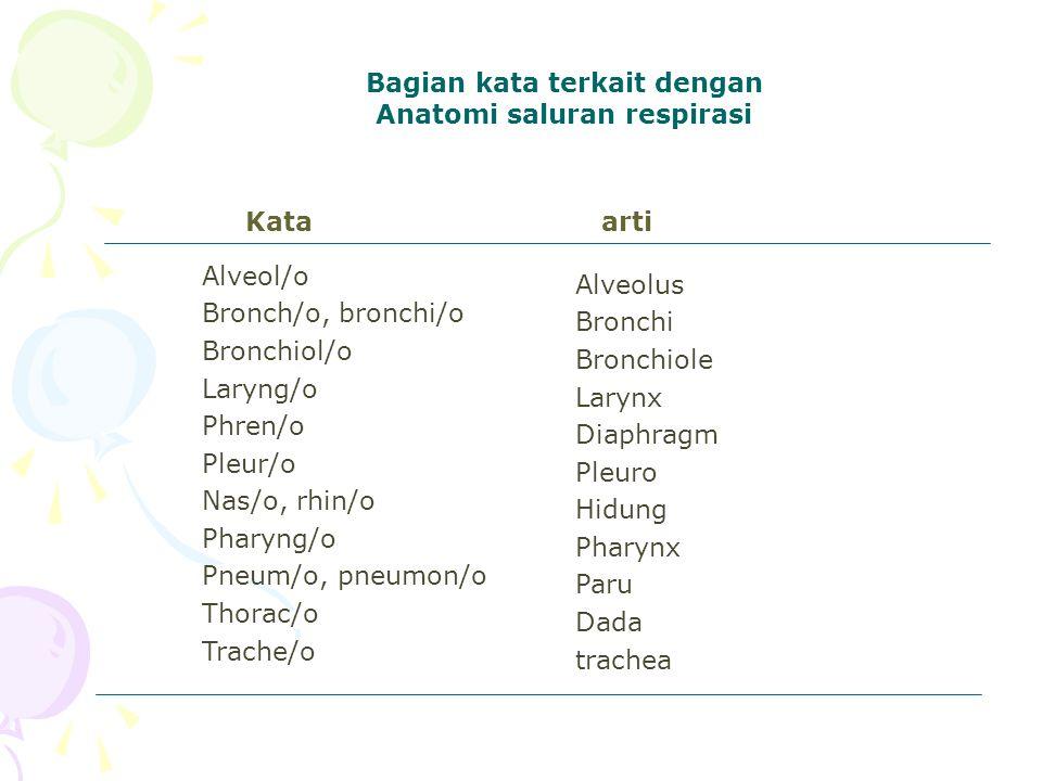 Bagian kata terkait dengan Anatomi saluran respirasi arti Alveol/o Bronch/o, bronchi/o Bronchiol/o Laryng/o Phren/o Pleur/o Nas/o, rhin/o Pharyng/o Pn
