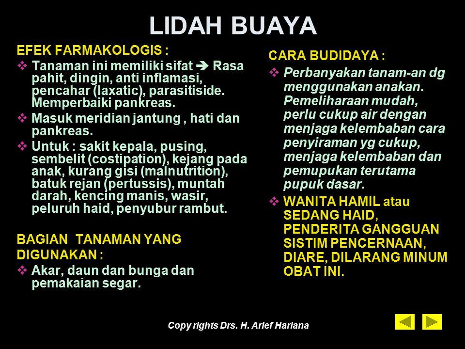 Copy rights Drs. H. Arief Hariana LIDAH BUAYA URAIAN TANAMAN: Tumbuh liar di tempat yang berhawa papas atau ditanam orang di pot dan pekarangan rumah