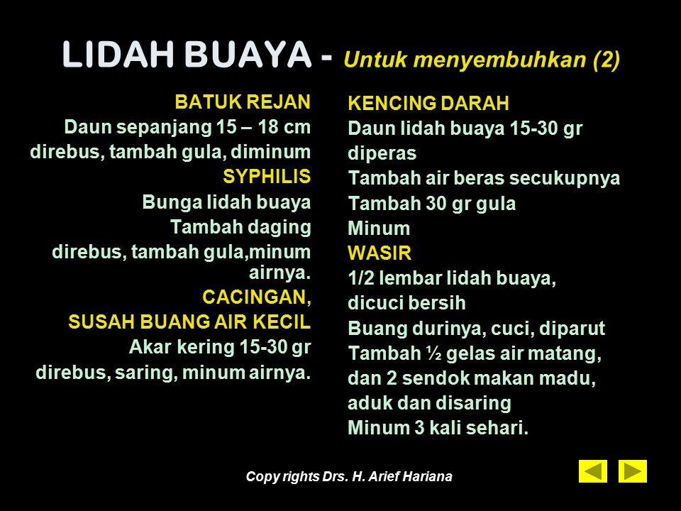 Copy rights Drs. H. Arief Hariana LIDAH BUAYA - Untuk menyembuhkan (1) KENCING MANIS (DM) 1 lembar lidah buaya, dicuci bersih Buang durinya, potong- p