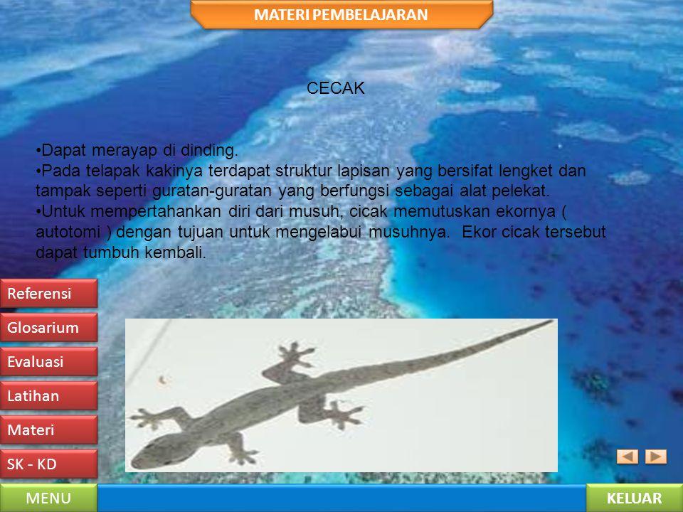KELUAR MENU SK - KD Materi Latihan Evaluasi Glosarium Referensi MATERI PEMBELAJARAN KELELAWAR Merupakan satu-satunya mamalia yang dapat terbang. Jenis