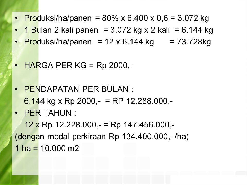 Produksi/ha/panen = 80% x 6.400 x 0,6 = 3.072 kg 1 Bulan 2 kali panen = 3.072 kg x 2 kali = 6.144 kg Produksi/ha/panen = 12 x 6.144 kg = 73.728kg HARGA PER KG = Rp 2000,- PENDAPATAN PER BULAN : 6.144 kg x Rp 2000,- = RP 12.288.000,- PER TAHUN : 12 x Rp 12.228.000,- = Rp 147.456.000,- (dengan modal perkiraan Rp 134.400.000,- /ha) 1 ha = 10.000 m2