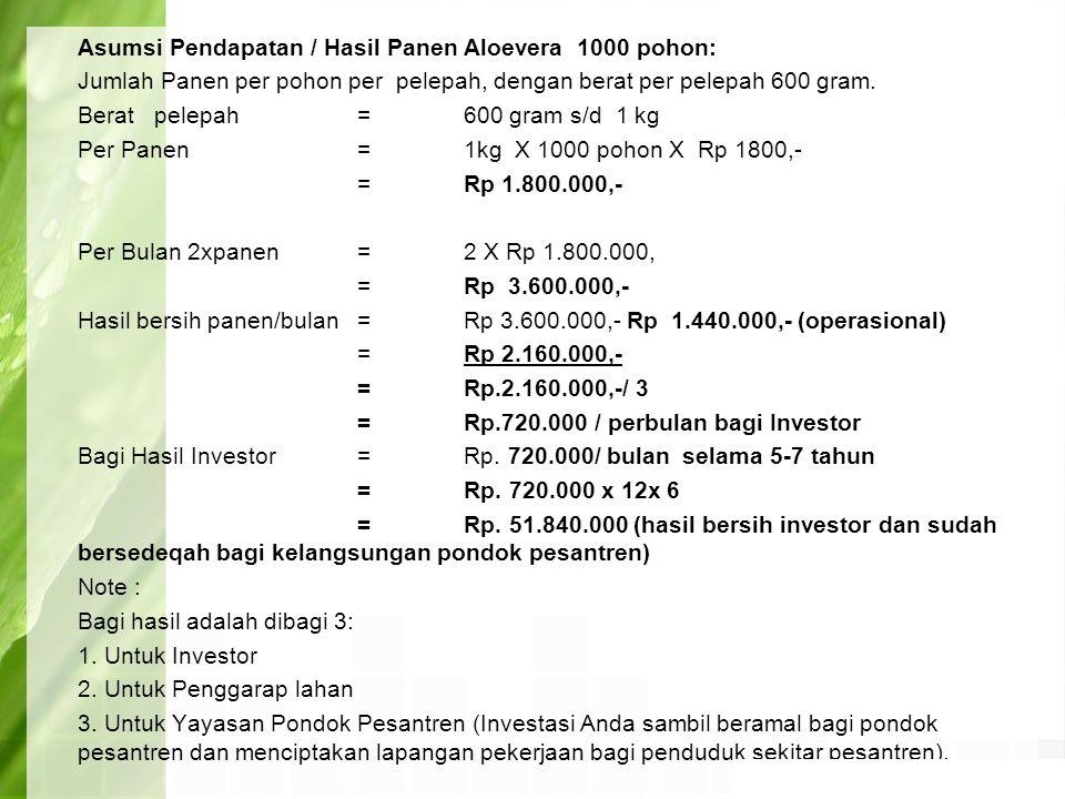 Asumsi Pendapatan / Hasil Panen Aloevera 1000 pohon: Jumlah Panen per pohon per pelepah, dengan berat per pelepah 600 gram. Berat pelepah= 600 gram s/