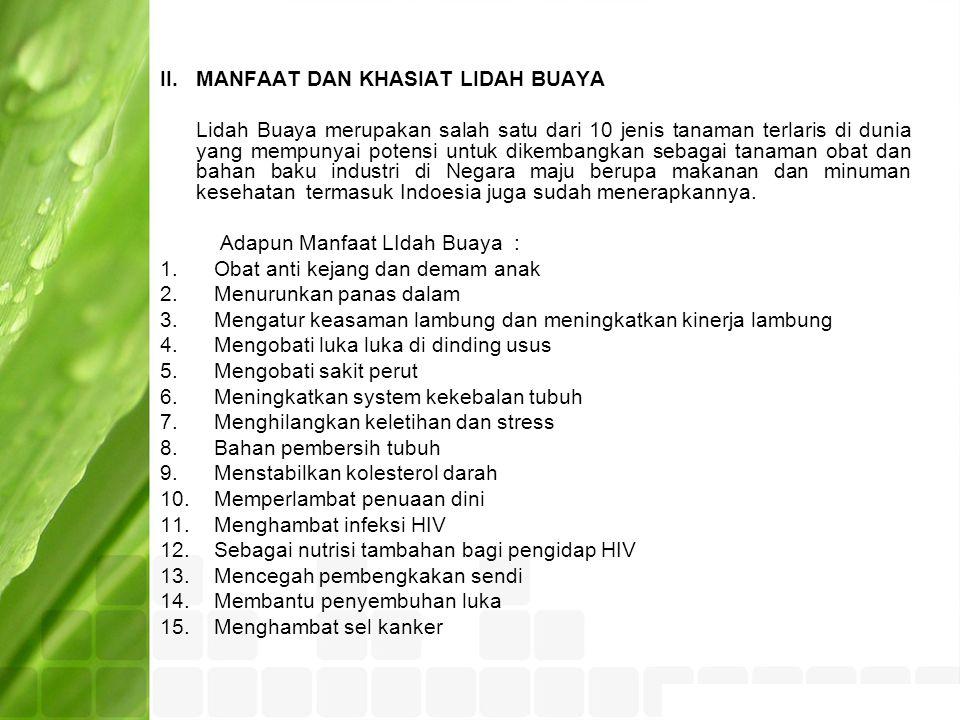 II.MANFAAT DAN KHASIAT LIDAH BUAYA Lidah Buaya merupakan salah satu dari 10 jenis tanaman terlaris di dunia yang mempunyai potensi untuk dikembangkan