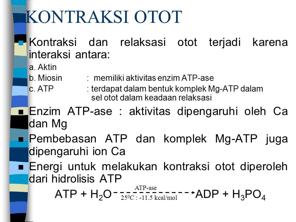 KONTRAKSI OTOT n Kontraksi dan relaksasi otot terjadi karena interaksi antara: a.