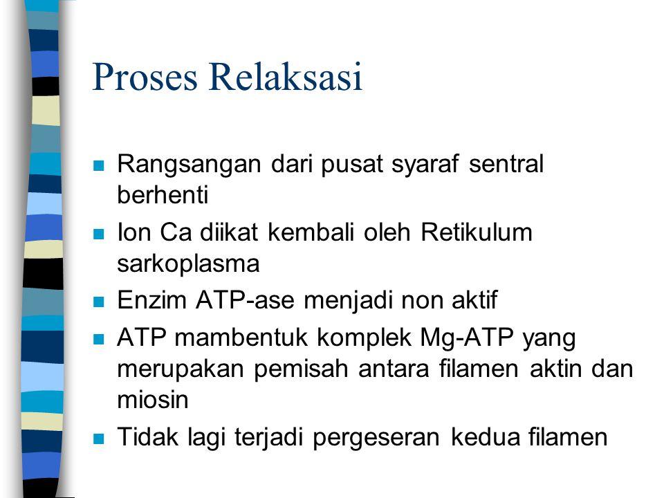 Proses Relaksasi n Rangsangan dari pusat syaraf sentral berhenti n Ion Ca diikat kembali oleh Retikulum sarkoplasma n Enzim ATP-ase menjadi non aktif n ATP mambentuk komplek Mg-ATP yang merupakan pemisah antara filamen aktin dan miosin n Tidak lagi terjadi pergeseran kedua filamen