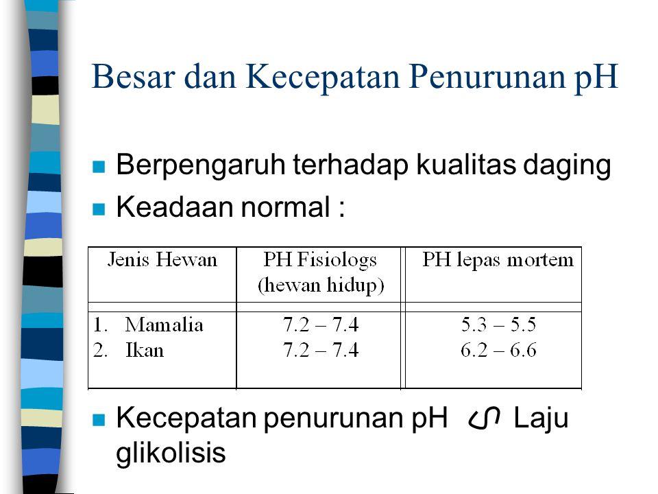 Besar dan Kecepatan Penurunan pH n Berpengaruh terhadap kualitas daging n Keadaan normal : n Kecepatan penurunan pH Laju glikolisis