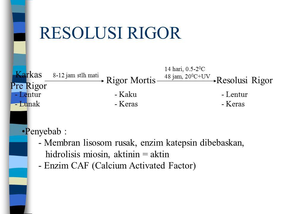 RESOLUSI RIGOR Karkas Pre Rigor Rigor MortisResolusi Rigor - Lentur - Lunak - Kaku - Keras - Lentur - Keras 8-12 jam stlh mati 14 hari, 0.5-2 0 C 48 jam, 20 0 C+UV Penyebab : - Membran lisosom rusak, enzim katepsin dibebaskan, hidrolisis miosin, aktinin = aktin - Enzim CAF (Calcium Activated Factor)