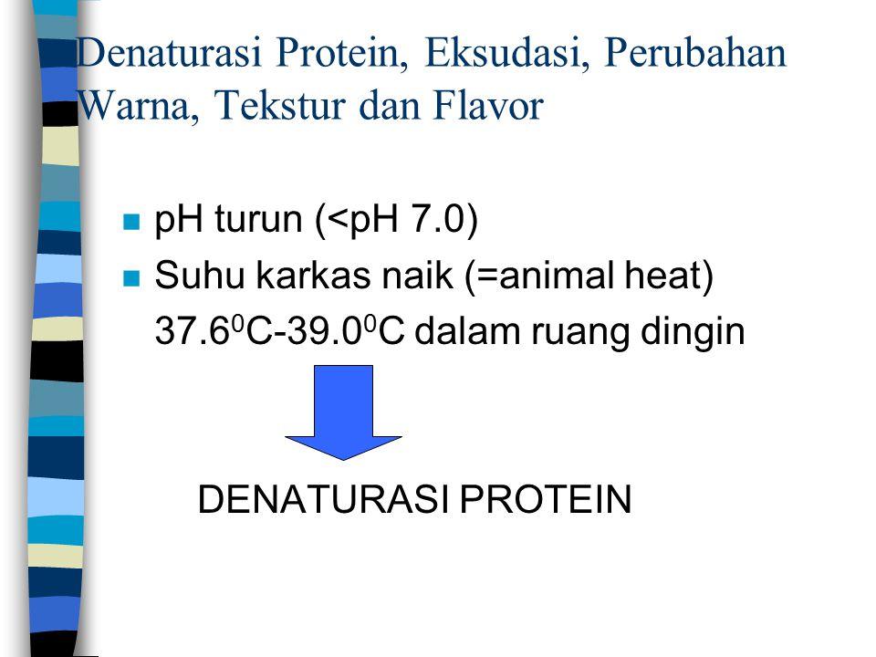 Denaturasi Protein, Eksudasi, Perubahan Warna, Tekstur dan Flavor n pH turun (<pH 7.0) n Suhu karkas naik (=animal heat) 37.6 0 C-39.0 0 C dalam ruang dingin DENATURASI PROTEIN