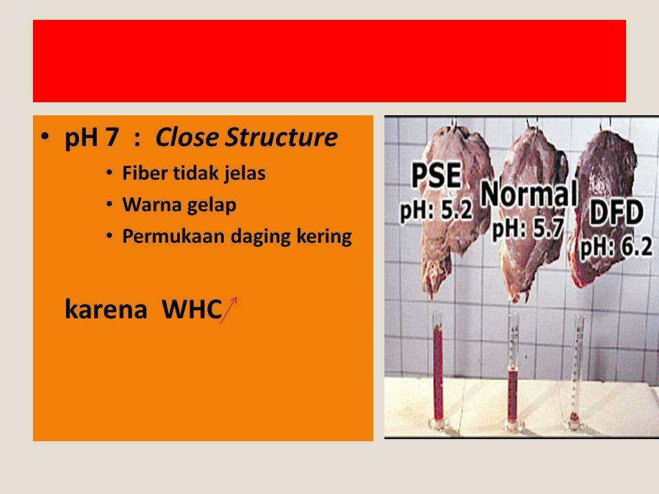 pH 7 : Close Structure Fiber tidak jelas Warna gelap Permukaan daging kering karena WHC