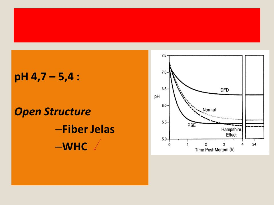 pH 4,7 – 5,4 : Open Structure – Fiber Jelas – WHC
