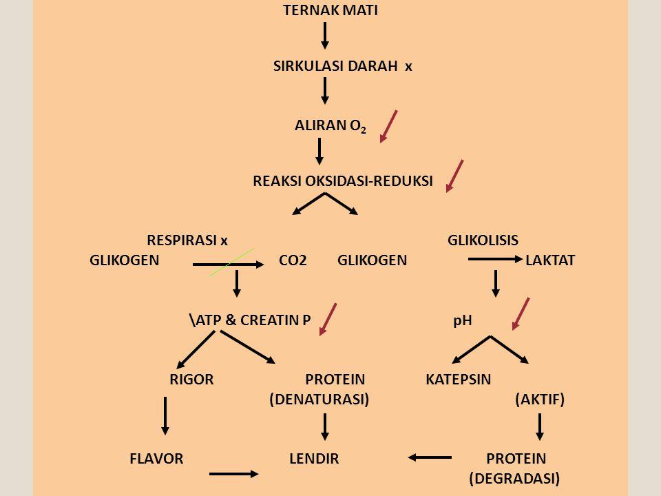TERNAK MATI SIRKULASI DARAH x ALIRAN O 2 REAKSI OKSIDASI-REDUKSI RESPIRASI x GLIKOLISIS GLIKOGEN CO2 GLIKOGEN LAKTAT \ATP & CREATIN P pH RIGOR PROTEIN