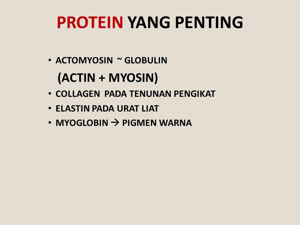 PROTEIN YANG PENTING ACTOMYOSIN ~ GLOBULIN (ACTIN + MYOSIN) COLLAGEN PADA TENUNAN PENGIKAT ELASTIN PADA URAT LIAT MYOGLOBIN  PIGMEN WARNA