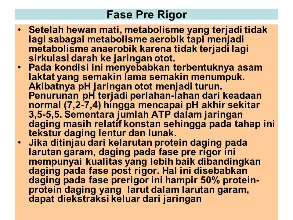 Fase Pre Rigor Setelah hewan mati, metabolisme yang terjadi tidak lagi sabagai metabolisme aerobik tapi menjadi metabolisme anaerobik karena tidak ter