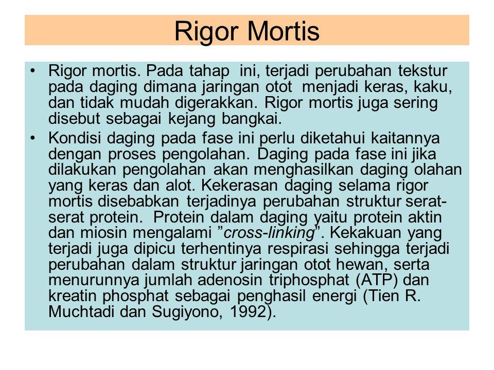 Rigor Mortis Rigor mortis. Pada tahap ini, terjadi perubahan tekstur pada daging dimana jaringan otot menjadi keras, kaku, dan tidak mudah digerakkan.