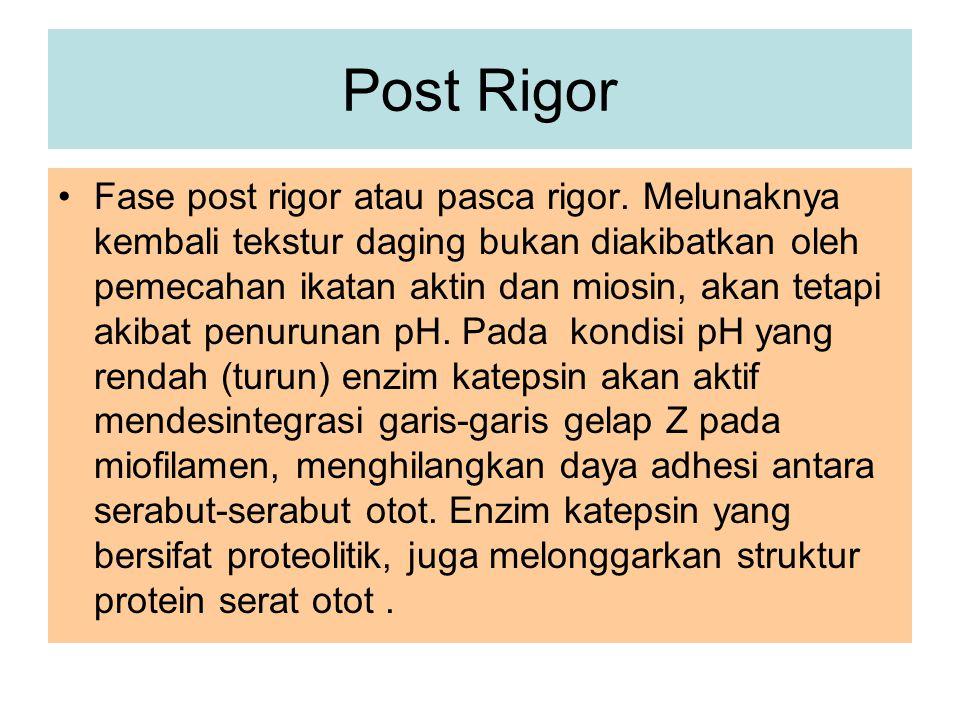 Post Rigor Fase post rigor atau pasca rigor. Melunaknya kembali tekstur daging bukan diakibatkan oleh pemecahan ikatan aktin dan miosin, akan tetapi a