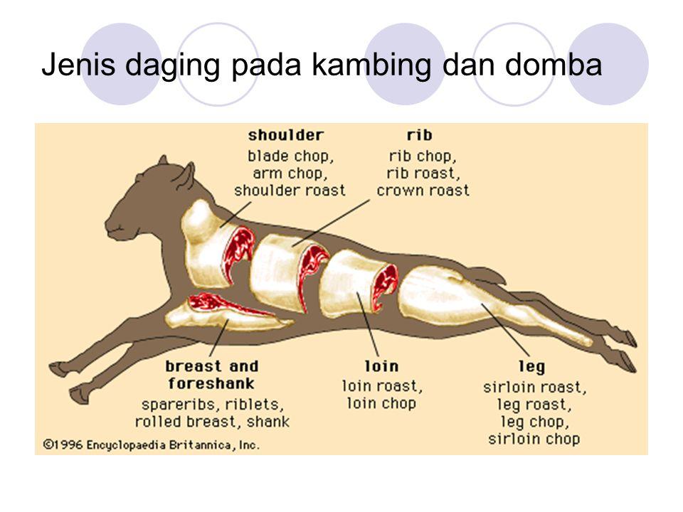 Jenis daging pada kambing dan domba