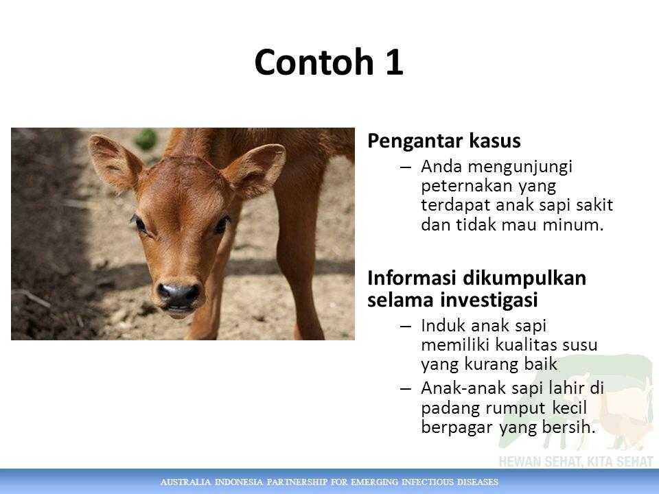 AUSTRALIA INDONESIA PARTNERSHIP FOR EMERGING INFECTIOUS DISEASES Contoh 1 Pengantar kasus – Anda mengunjungi peternakan yang terdapat anak sapi sakit