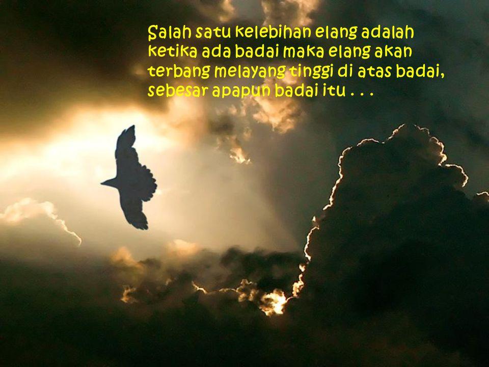Salah satu kelebihan elang adalah ketika ada badai maka elang akan terbang melayang tinggi di atas badai, sebesar apapun badai itu...