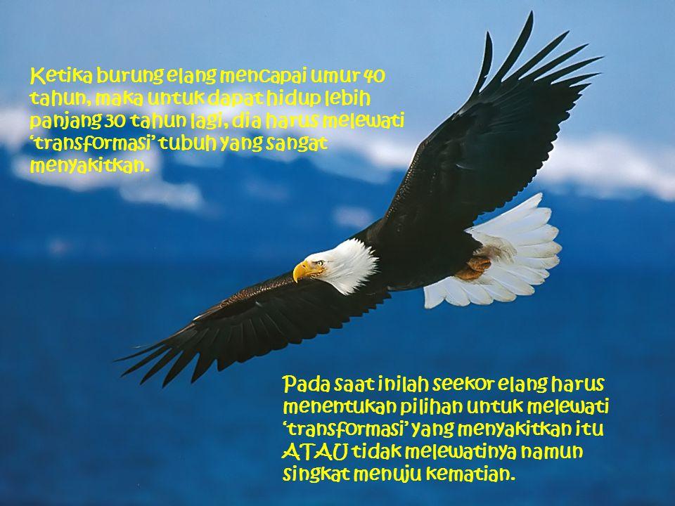 Ketika burung elang mencapai umur 40 tahun, maka untuk dapat hidup lebih panjang 30 tahun lagi, dia harus melewati 'transformasi' tubuh yang sangat me