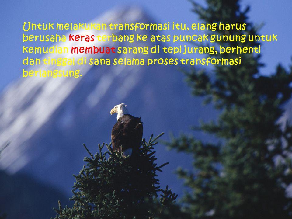Untuk melakukan transformasi itu, elang harus berusaha keras terbang ke atas puncak gunung untuk kemudian membuat sarang di tepi jurang, berhenti dan