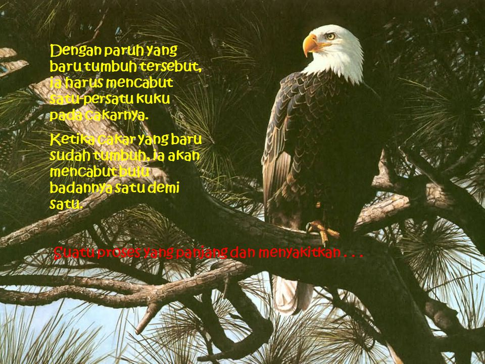 Dengan paruh dan cakar baru, elang tersebut mulai menjalani kehidupan 30 tahun berikutnya dengan penuh energi.
