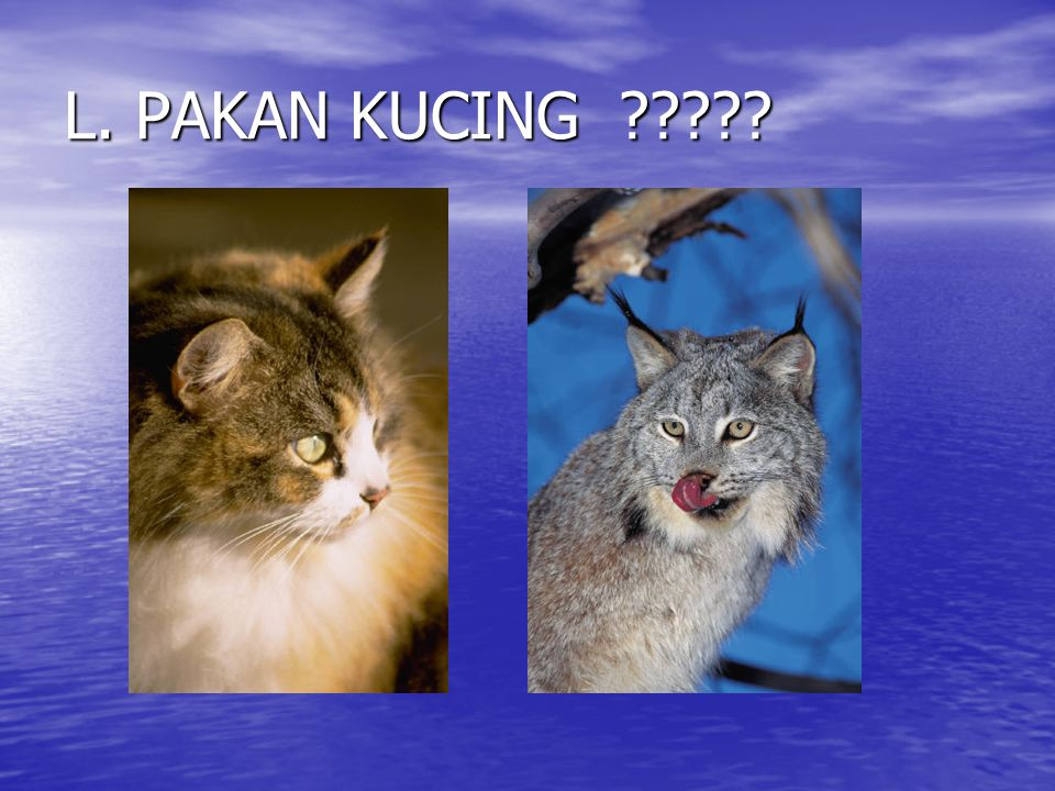 L. PAKAN KUCING ?????