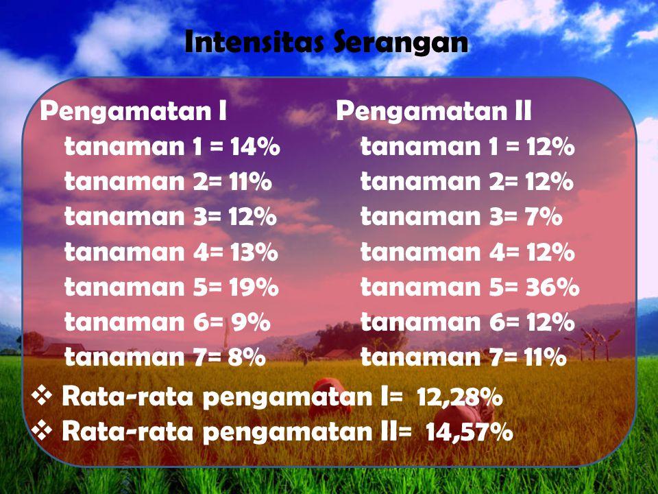 Pengamatan I tanaman 1 = 14% tanaman 2= 11% tanaman 3= 12% tanaman 4= 13% tanaman 5= 19% tanaman 6= 9% tanaman 7= 8% Pengamatan II tanaman 1 = 12% tanaman 2= 12% tanaman 3= 7% tanaman 4= 12% tanaman 5= 36% tanaman 6= 12% tanaman 7= 11% Intensitas Serangan  Rata-rata pengamatan I= 12,28%  Rata-rata pengamatan II= 14,57%