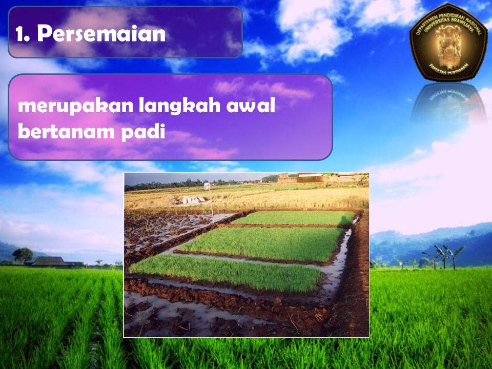 1. Persemaian merupakan langkah awal bertanam padi
