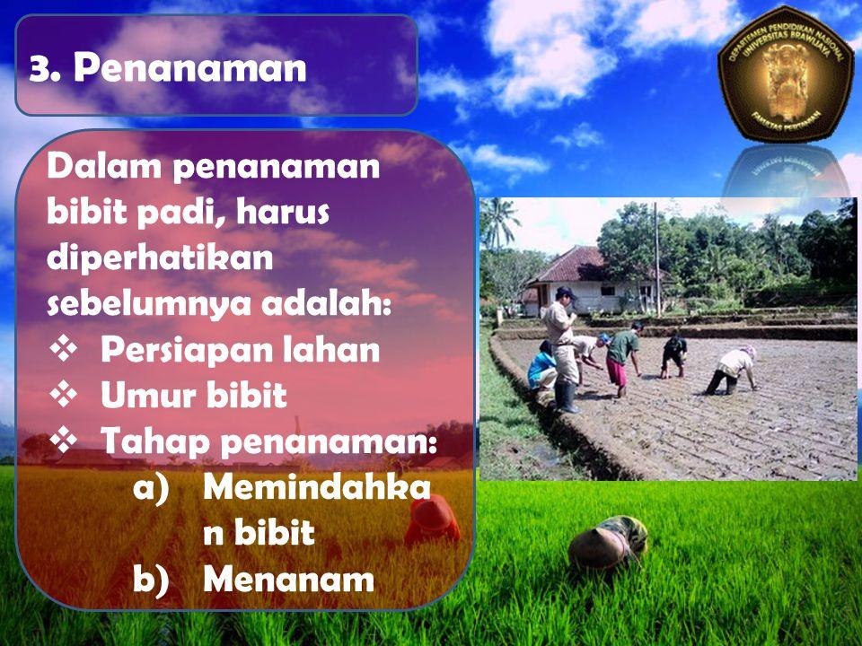 3. Penanaman Dalam penanaman bibit padi, harus diperhatikan sebelumnya adalah:  Persiapan lahan  Umur bibit  Tahap penanaman: a)Memindahka n bibit