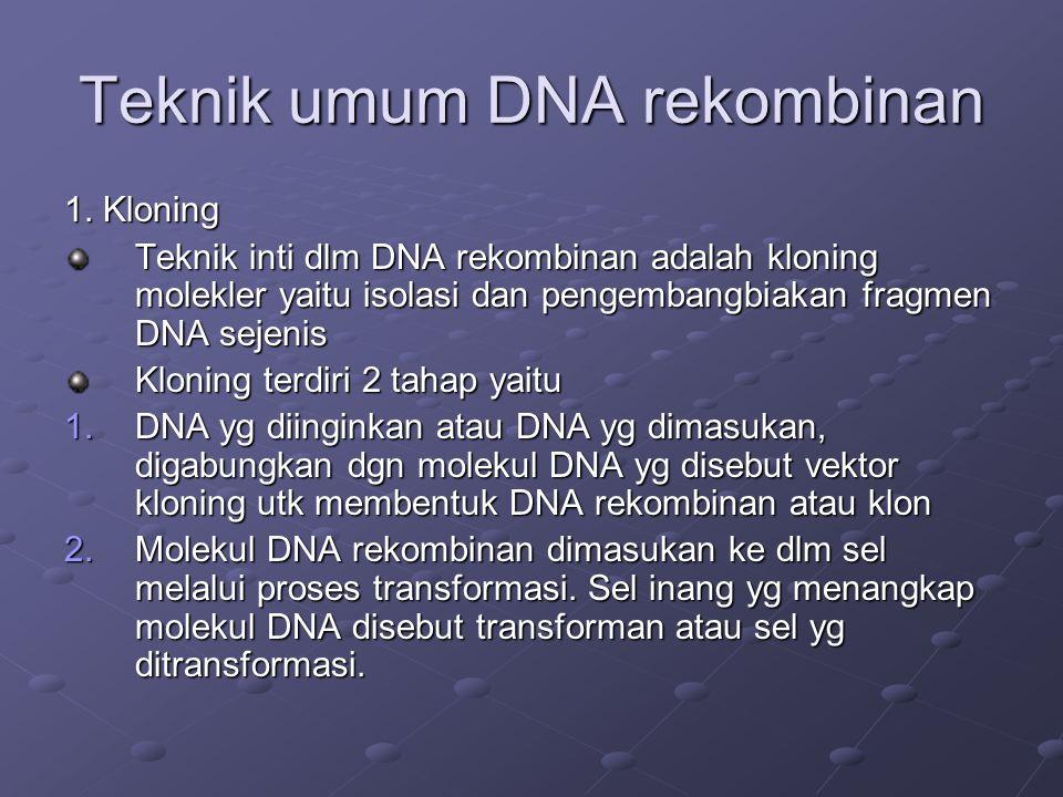 Teknik umum DNA rekombinan 1. Kloning Teknik inti dlm DNA rekombinan adalah kloning molekler yaitu isolasi dan pengembangbiakan fragmen DNA sejenis Kl