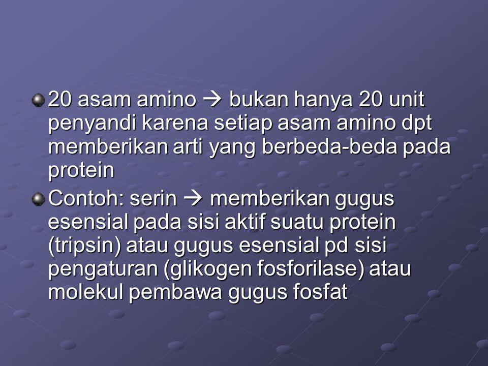 20 asam amino  bukan hanya 20 unit penyandi karena setiap asam amino dpt memberikan arti yang berbeda-beda pada protein Contoh: serin  memberikan gu