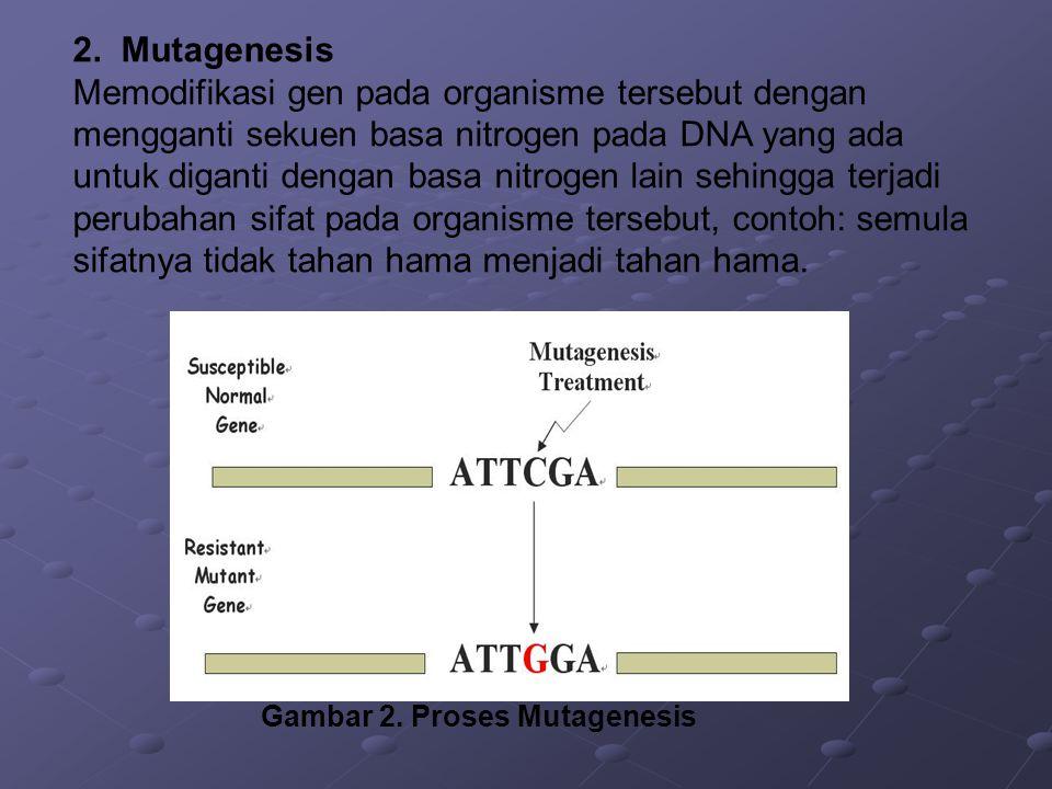 2. Mutagenesis Memodifikasi gen pada organisme tersebut dengan mengganti sekuen basa nitrogen pada DNA yang ada untuk diganti dengan basa nitrogen lai