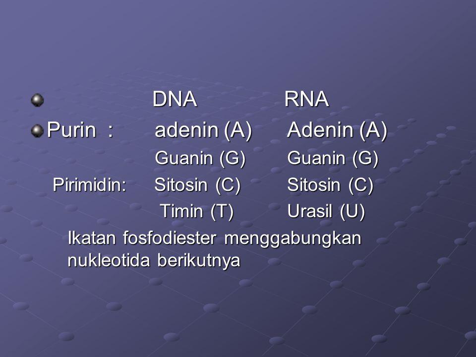 DNA RNA DNA RNA Purin : adenin (A) Adenin (A) Guanin(G) Guanin (G) Guanin(G) Guanin (G) Pirimidin: Sitosin (C) Sitosin (C) Timin (T) Urasil (U) Timin