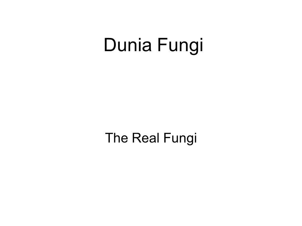Dunia Fungi The Real Fungi