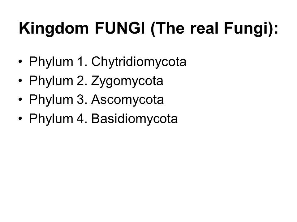 Kingdom FUNGI (The real Fungi): Phylum 1.Chytridiomycota Phylum 2.