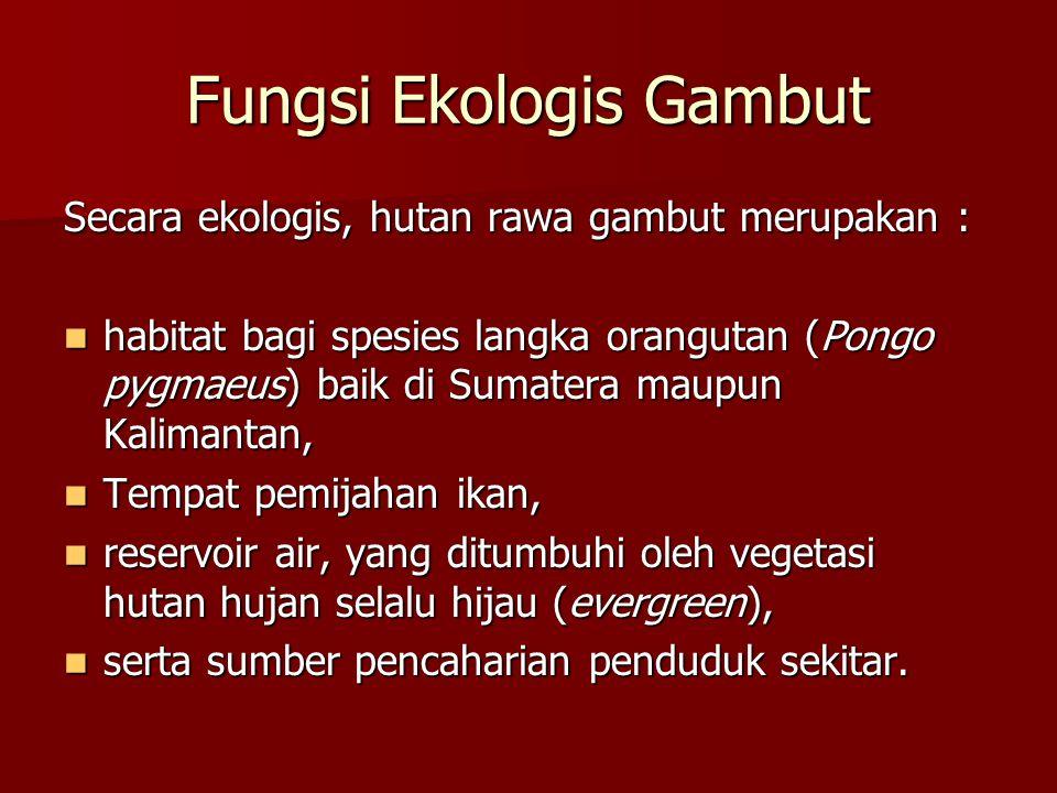Fungsi Ekologis Gambut Secara ekologis, hutan rawa gambut merupakan : habitat bagi spesies langka orangutan (Pongo pygmaeus) baik di Sumatera maupun K