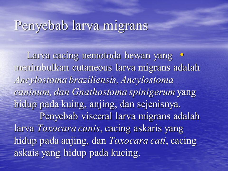 Penyebab larva migrans Larva cacing nemotoda hewan yang menimbulkan cutaneous larva migrans adalah Ancylostoma braziliensis, Ancylostoma caninum, dan