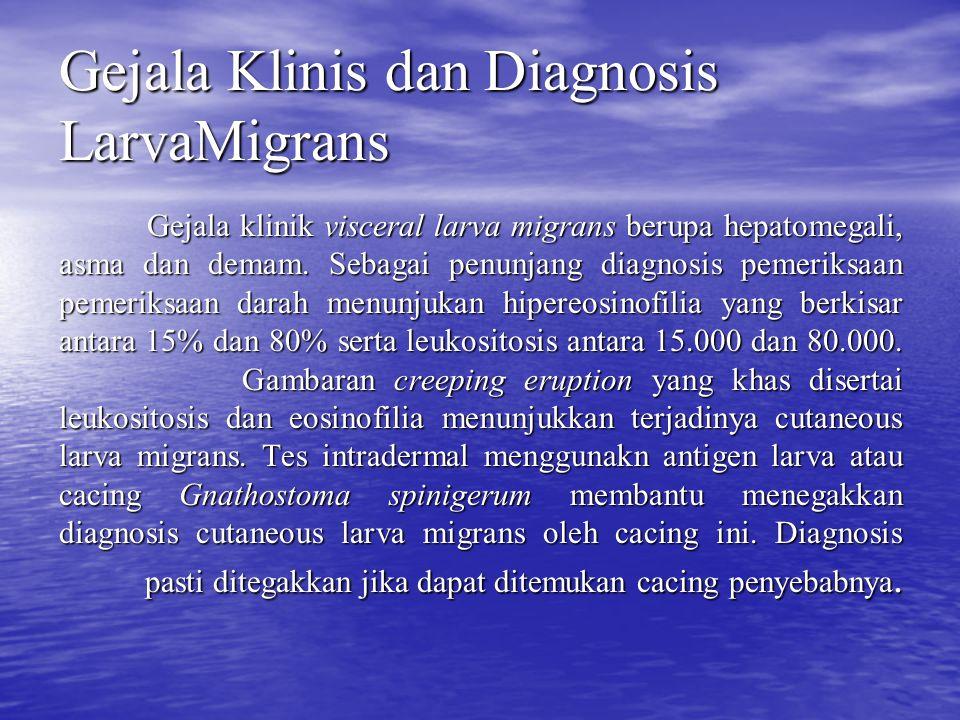 Gejala Klinis dan Diagnosis LarvaMigrans Gejala klinik visceral larva migrans berupa hepatomegali, asma dan demam. Sebagai penunjang diagnosis pemerik
