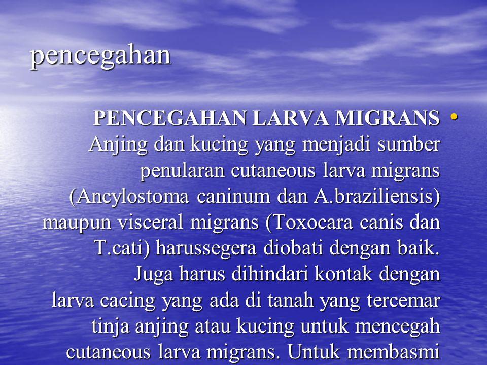 pencegahan PENCEGAHAN LARVA MIGRANS Anjing dan kucing yang menjadi sumber penularan cutaneous larva migrans (Ancylostoma caninum dan A.braziliensis) m
