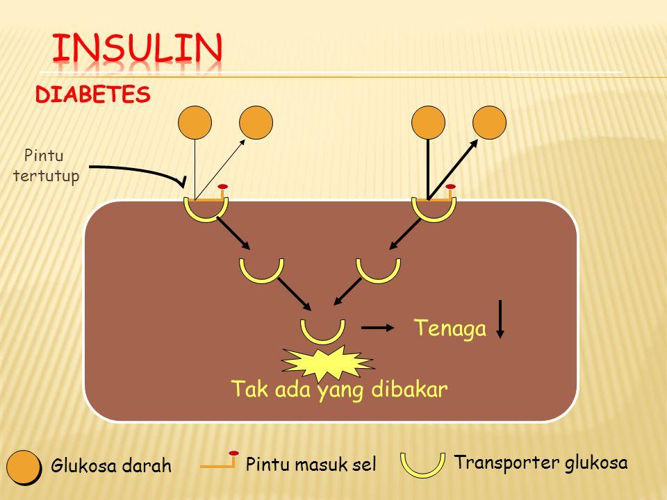 Pilar Penatalaksanaan DM Terapi gizi medis Latihan JasmaniIntervensi farmakologis Penyuluhan/ Edukasi