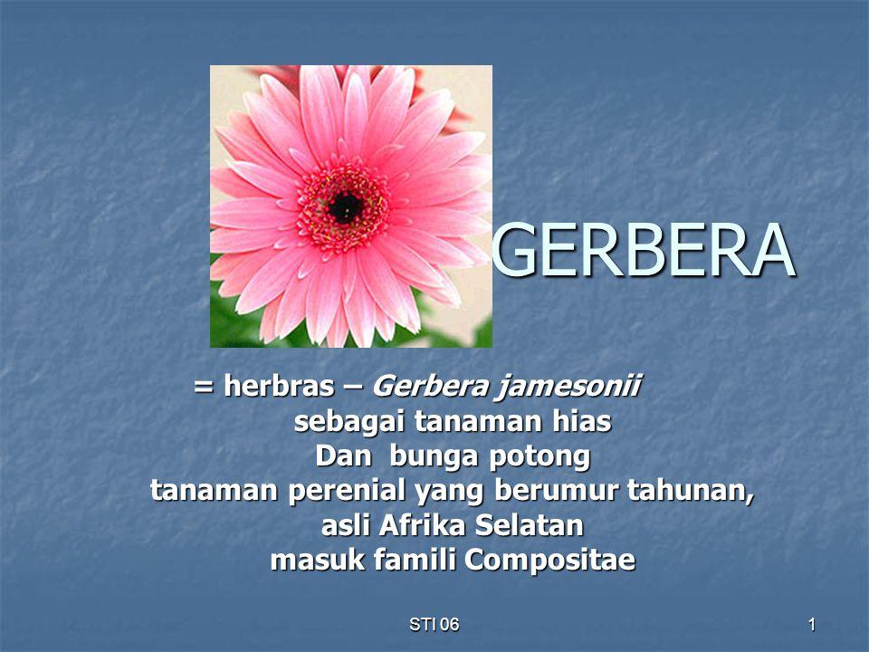 STI 06 1 GERBERA = herbras – Gerbera jamesonii sebagai tanaman hias Dan bunga potong tanaman perenial yang berumur tahunan, asli Afrika Selatan masuk
