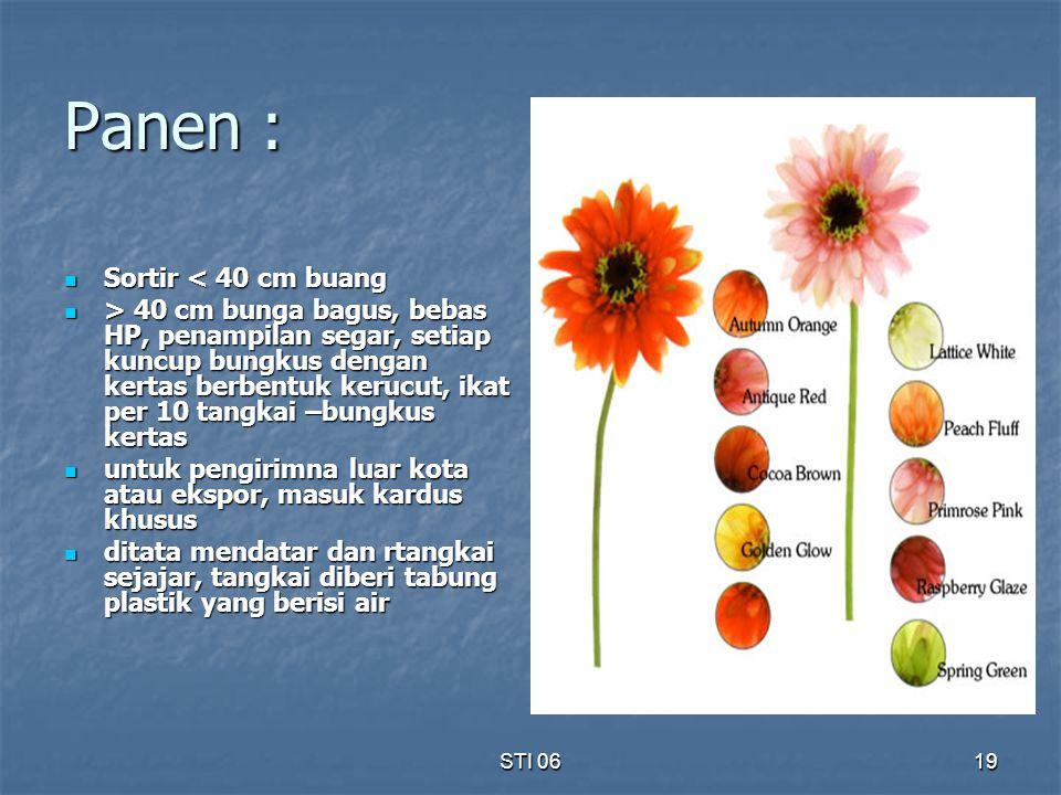 STI 0619 Panen : Sortir < 40 cm buang Sortir < 40 cm buang > 40 cm bunga bagus, bebas HP, penampilan segar, setiap kuncup bungkus dengan kertas berben