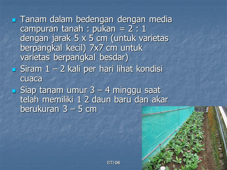 STI 069 Tanam dalam bedengan dengan media campuran tanah : pukan = 2 : 1 dengan jarak 5 x 5 cm (untuk varietas berpangkal kecil) 7x7 cm untuk varietas