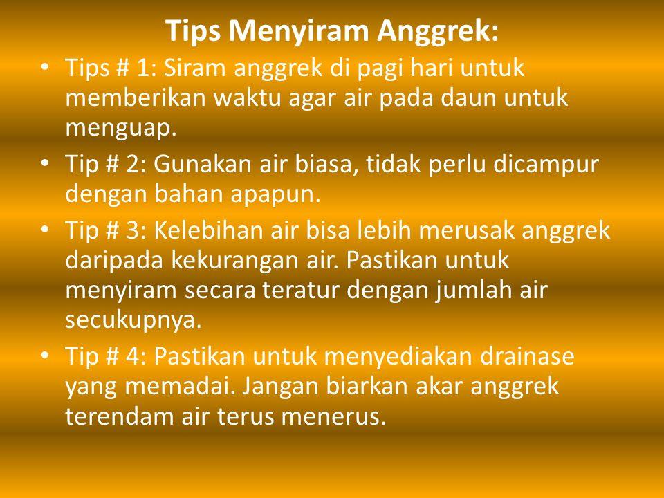 Tips Menyiram Anggrek: Tips # 1: Siram anggrek di pagi hari untuk memberikan waktu agar air pada daun untuk menguap. Tip # 2: Gunakan air biasa, tidak