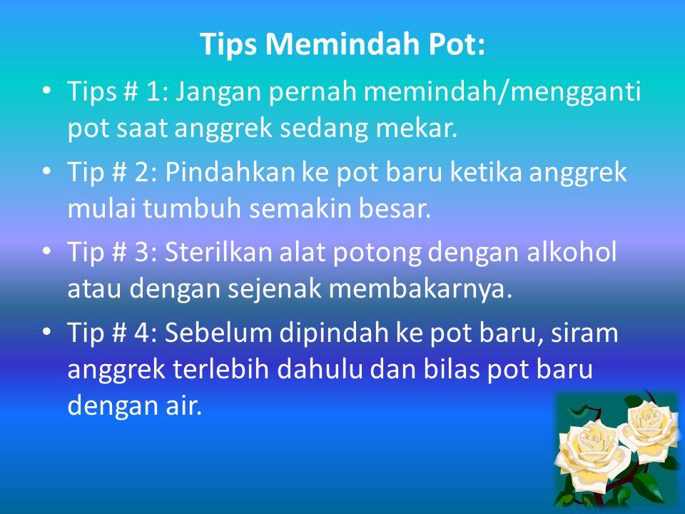 Tips Memindah Pot: Tips # 1: Jangan pernah memindah/mengganti pot saat anggrek sedang mekar. Tip # 2: Pindahkan ke pot baru ketika anggrek mulai tumbu