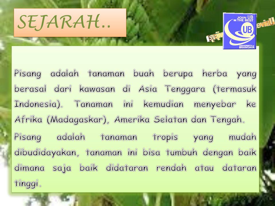 SEJARAH..