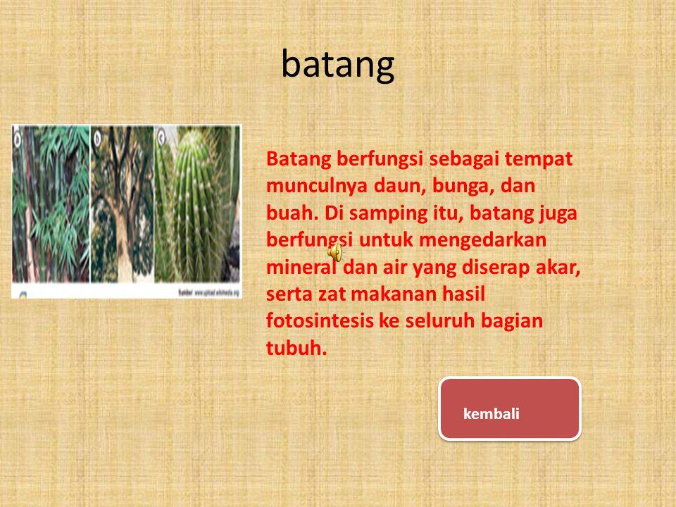 Sizuka tadi kamu sudah paham tentang bagian-bagian tumbuhan yang dijelasin kak haikal tadi??.
