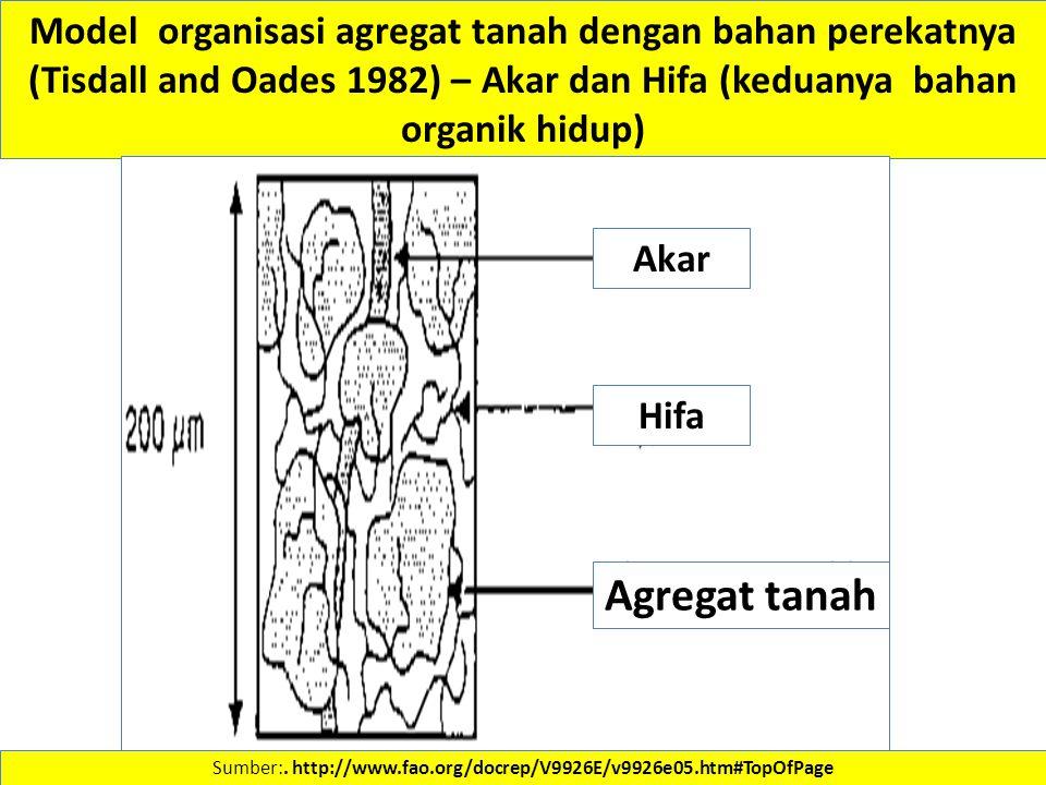 Sumber:. http://www.fao.org/docrep/V9926E/v9926e05.htm#TopOfPage Model organisasi agregat tanah dengan bahan perekatnya (Tisdall and Oades 1982) – Aka